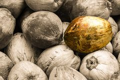 Abstract background a lot of coconut fruit peeled dried tinted gray design site base substrate menu light nut one contrast stock images