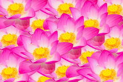 Abstract background of lotus flowers.  Stock Photos