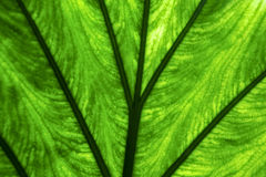 Abstract  background  macro close up of a  green Royalty Free Stock Image