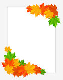 Abstract background with maple leaves Royalty Free Stock Image