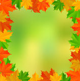 Abstract background with maple leaves Royalty Free Stock Photography