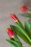 Abstract background in modern halftones decorated flowers of red tulips, blurred style. Delicate tints for vertical Stock Photos