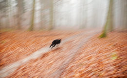 Abstract background. Motion blurred running dog. Stock Photos