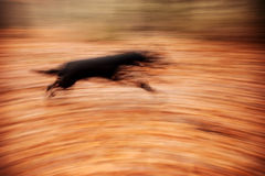 Abstract background. Motion blurred running dog in autumnal park Stock Images