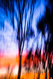 Abstract Background moving tree sunset. This is a tree in my backyard, covered in sunset beams, with blue hour light topping it off Royalty Free Stock Photo