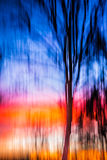 Abstract Background moving tree sunset Royalty Free Stock Images