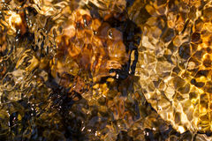 Abstract background of moving water. Mosaic of browns, greens, and yellows in a fast-moving stream Stock Photo