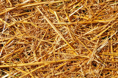 Abstract background of mowed wheat ears and straw Stock Photography