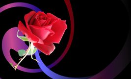 Abstract background multicolored shaded wavy background with red rose, vector illustration. Many uses for paintings,printing,mobile backgrounds, book,covers royalty free stock photos