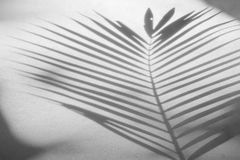 Free Abstract Background Of Shadow Palm Leaves On Concrete Rough Texture Wall Stock Photos - 98348323