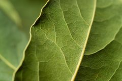 Abstract background - organic green leaves Stock Images