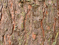 Abstract background. pine bark Stock Photos
