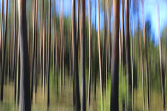 Abstract Background with Pine Tree Trunks. Artistic landscape with pine forest, tree trunks and blue sky, effect achieved with in-camera motion blur Royalty Free Stock Image