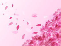 Abstract background with pink flowers and flying petals. Vector illustration stock illustration