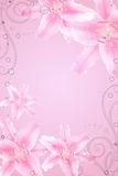 Abstract background with pink lillies Royalty Free Stock Photography