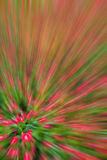 Abstract background of planting flower in garden,with blur filte Royalty Free Stock Images
