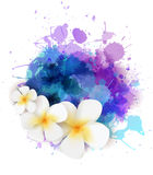 Abstract background with plumeria flowers Stock Images