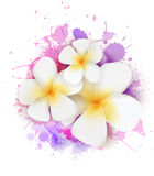 Abstract background with plumeria flowers Royalty Free Stock Photos