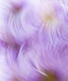 Abstract background in purple and white colors Stock Photos