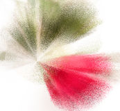 Abstract background in red and green. Colors on white Royalty Free Stock Images