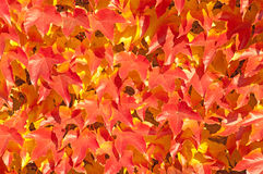 Abstract background. red leaves Stock Photography