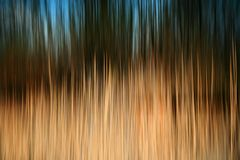 Abstract background of reed. Abstract motion blurred nature background royalty free stock images