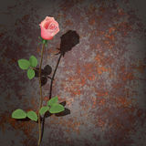 Abstract background with rose Stock Image