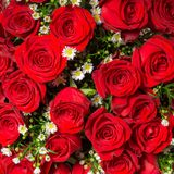 Abstract background of roses Stock Images