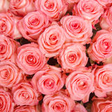 Abstract background of roses Royalty Free Stock Photo