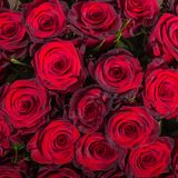 Abstract background of roses Stock Photos