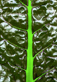 Abstract background, screen saver. green leaf with vivid bright veins Stock Image