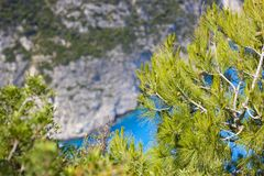 Abstract background with sea, rocks and pines royalty free stock photos