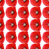 Abstract background seamless all over pattern poppies. Beautiful red poppy Papaver rhoeas spring flower seamless pattern of red poppies on white background royalty free stock images