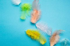 Abstract background from set of multi-colored beautiful and soft bird feathers on blue royalty free stock photo