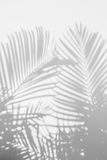 Abstract background of shadow palm leaves on wall. royalty free stock photography