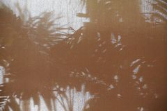 Abstract background shadow shade of the palm leaf. On curtain Stock Photos