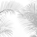 Abstract background of shadows palm leaves on a white wall. Royalty Free Stock Photo
