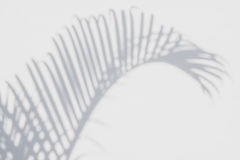 Abstract background of shadows palm leaves on a white wall. Stock Images