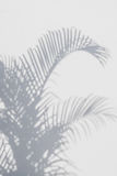 Abstract background of shadows palm leaves on a white wall. Stock Photos
