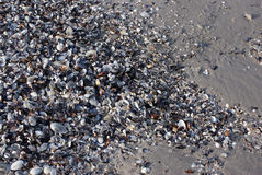 Abstract background with shells and sand stock image