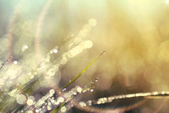 Abstract background of shining a bright morning dew Royalty Free Stock Photo