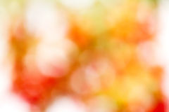 Abstract,  background. Shooting tree  for natural Bokeh  background Stock Photo