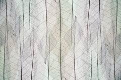Abstract background from skeletons of leave. Abstract background from skeletons of autumn leaves Stock Image