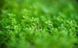 Abstract background  - Soft focus blurred Green leaf plant Royalty Free Stock Photography