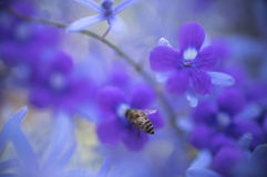 Abstract background  - Soft focus blurred violet flowers background Royalty Free Stock Photography