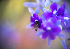 Abstract background  - Soft focus blurred violet flowers background Stock Photography