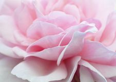 Free Abstract Background Soft Pale Baby Pink Rose Petals Wallpaper Royalty Free Stock Photos - 121783528