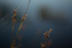 Abstract background with spider web on plant Stock Photo