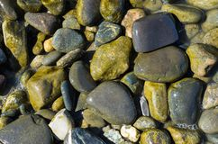 Abstract background texture, Colorful sea stones in water, top view royalty free stock image