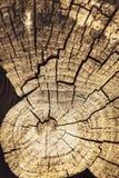 Cracks on the old stump Royalty Free Stock Photos